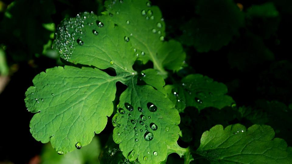 Leaves, Dew, Green, Dewdrop, Drop Of Water, Autumn