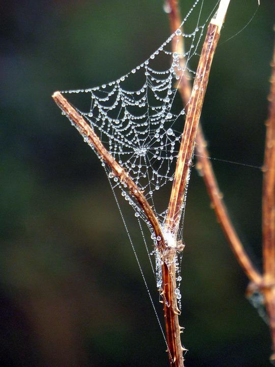 Spider Web, Meadow, Droplets, Dewdrops, Dew, Cobweb