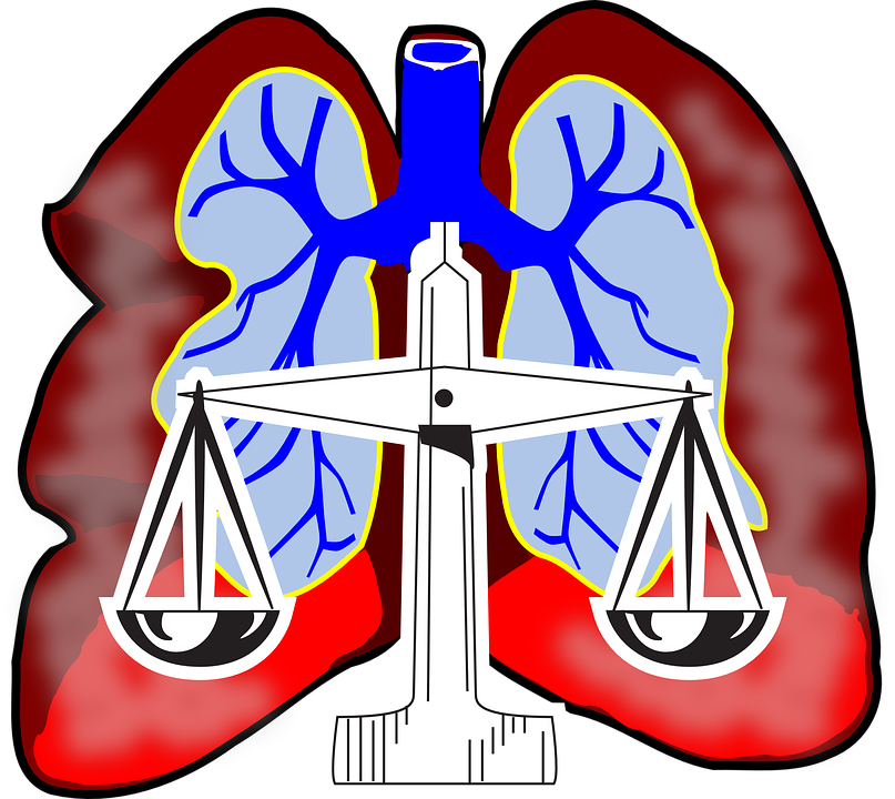 Lungs, Diagram, Air, System, Respiratory, Biology