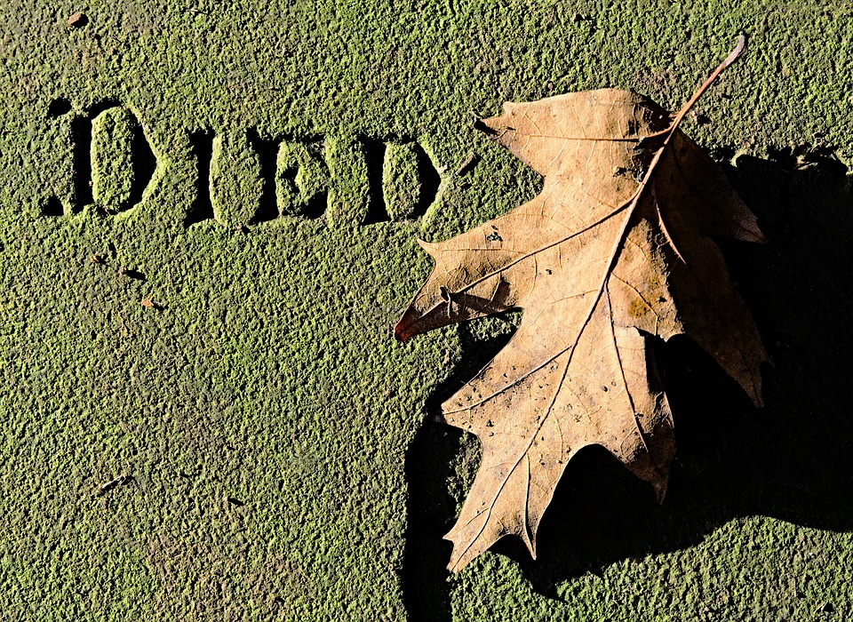 Dead, Leaf, Died, Death, Tomb, Stone, Memorial, Decay