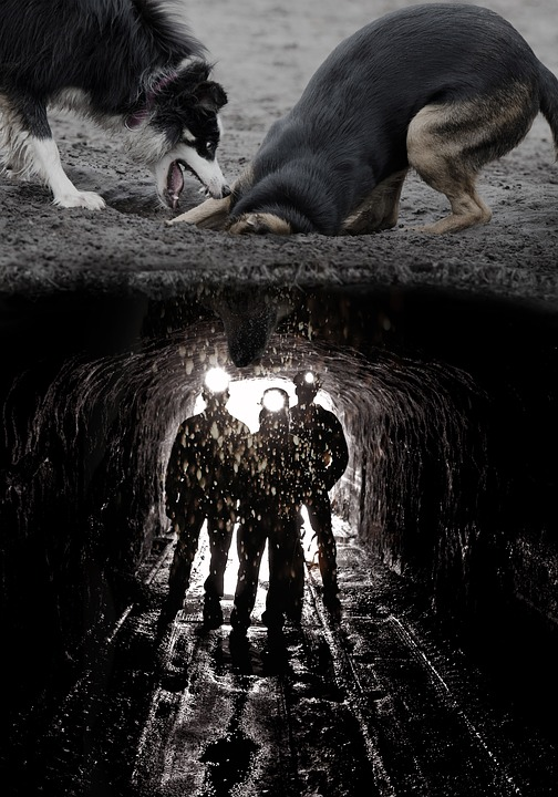 Dogs, Digging, Mine, Funny, Image Editing, Photomontage