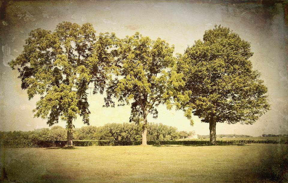 Scenery, Trees, Artistic, Art Print, Digital Art