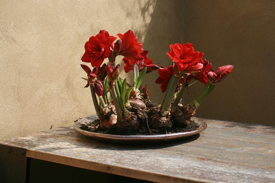 Flowers, Bulbs, Red, Dining Table, Wooden, Light
