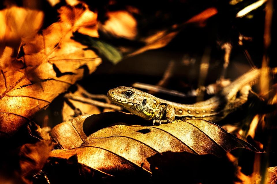 Nature, Dinosaur, Snakes, Dino, T Rex, Reptile, Animal