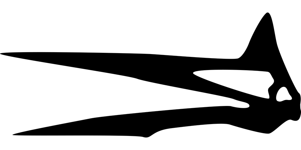 Dinosaur, Skull, Silhouette, Quetzalcoatlus, Bone, Head