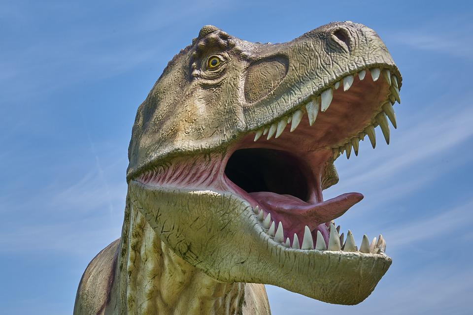 T Rex, Dinosaur, Model, Dino, Reptile, Extinct