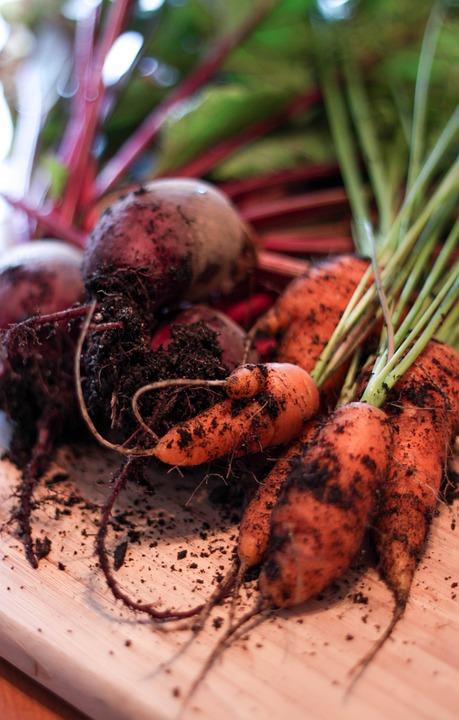 Carrots, Garden, Dirt, Beets, Veggies, Fresh, Harvest