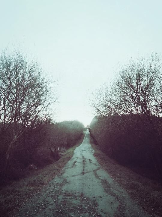 Rural, Dirt, Road, Countryside, Rocks, Gravel, Trees