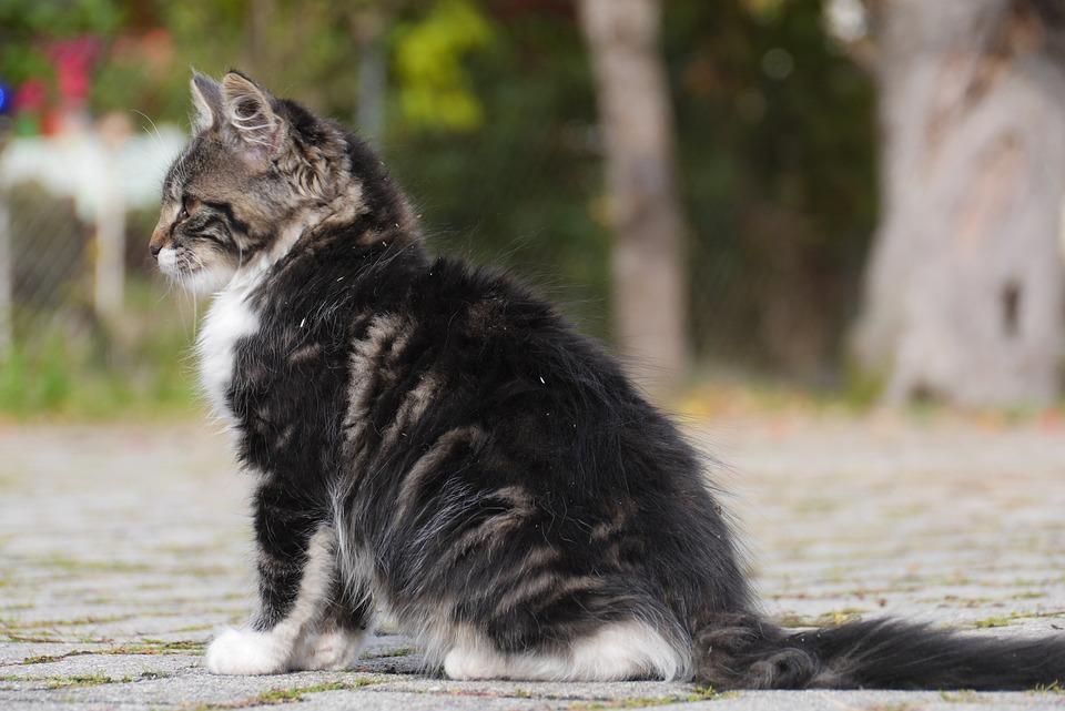 Cat, Animal, Cute, Homeless, Dirty, Street, Outdoors