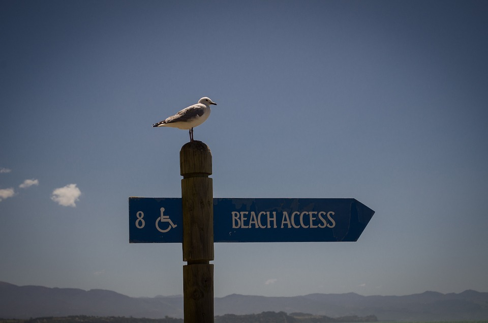 Seagull, Poster, Disabled, Sky