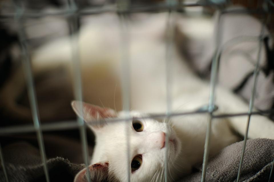 Disease, Rest, Prison, White Cat, Damage
