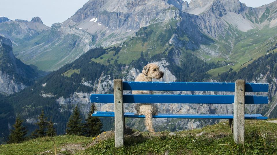 Bank, View, Dog, Outlook, Distant, Landscape, Nature