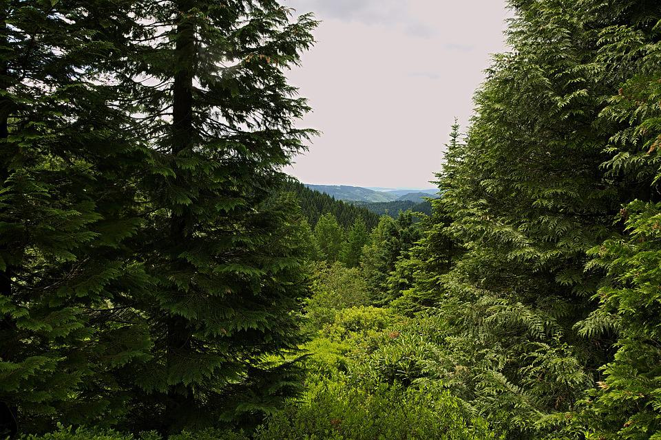 Forest, View, Distant View, Thuringian Forest, Trees