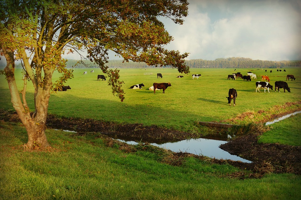 Countryside, Rural, Cattle, Pasture, Tree, Ditch