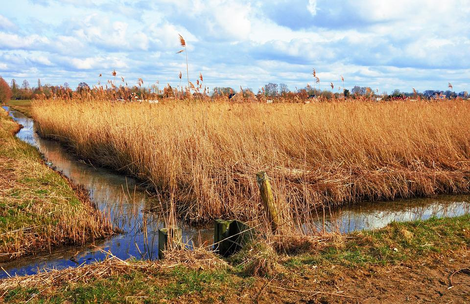 Ditch, Water, Wetland, Marsh, Reed, Vegetation, Banks