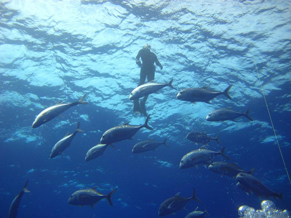 Sea, Ocean, Water, Light, Diver, Fish, Swimming, Diving