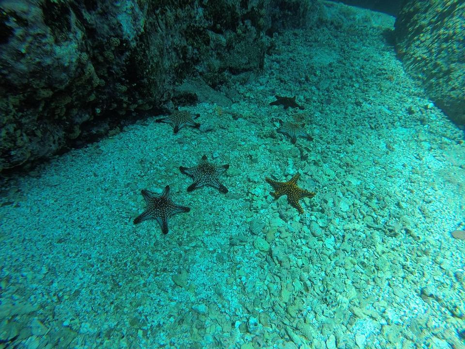 Sea Star, Sea bottom, Diving, Nature, Sea, Ocean