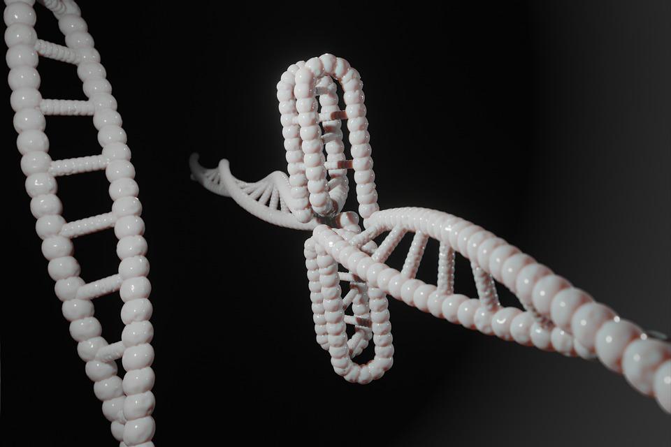 Human, Dna, Genetic, Cytosine, C-rich Regions, I-motif