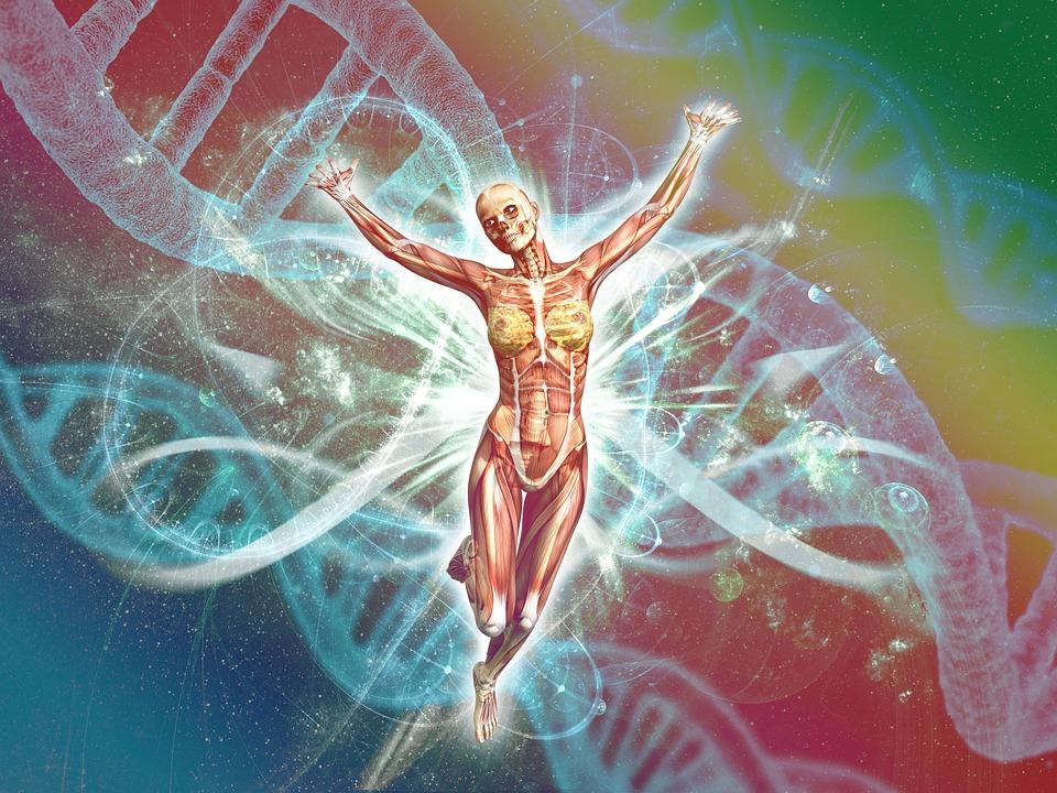 Human, Biology, Body, Dna, Physically, Genetics