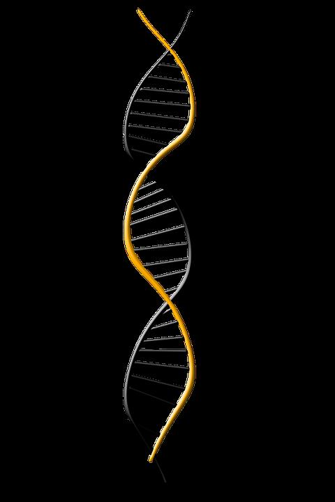 Dna, Deoxyribonucleic Acid, Dns, Genetics, Symbol