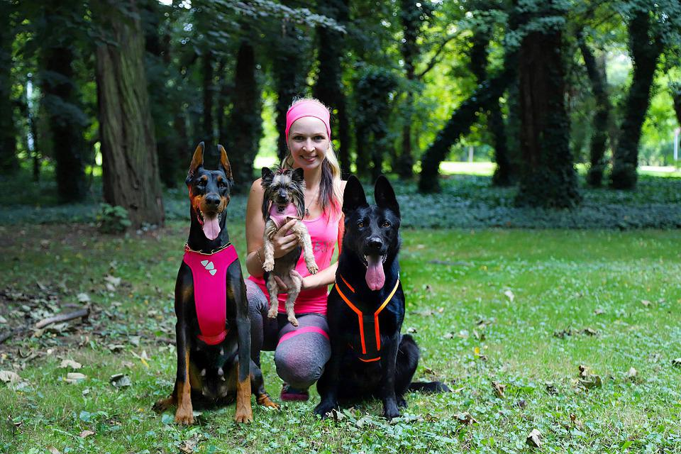 Blonde Girl, Yorkshire Terrier, Doberman