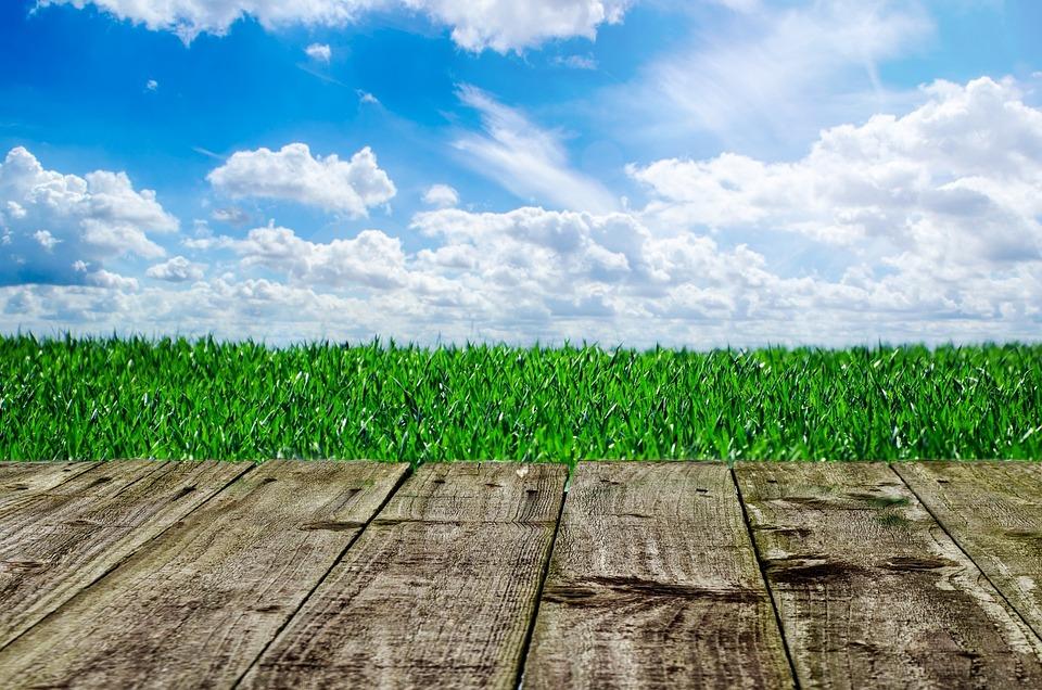 Wooden, Background, Dock, Wood, Floor, Grass, Garden