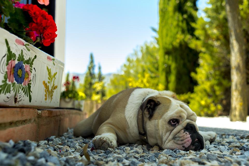 Dog, Pet, Puppy, Cute, Adorable, Tamed, Sad, Together