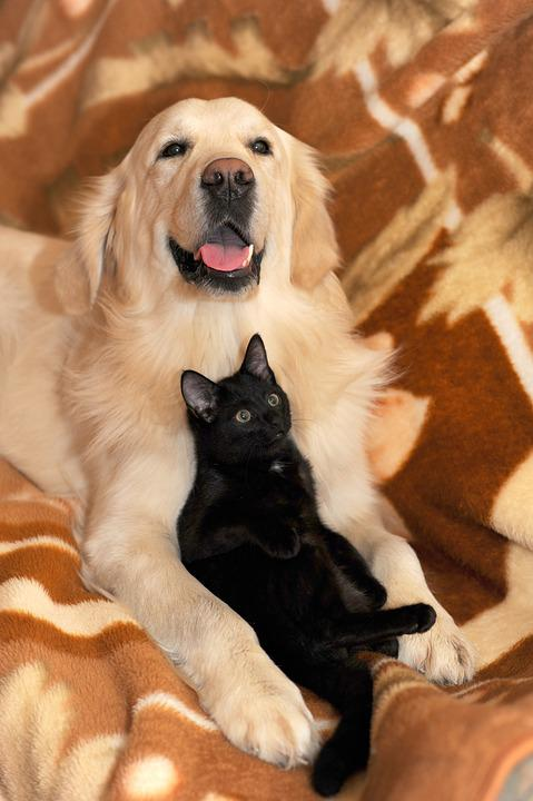Dog And Cat, Ritriver And The Cat