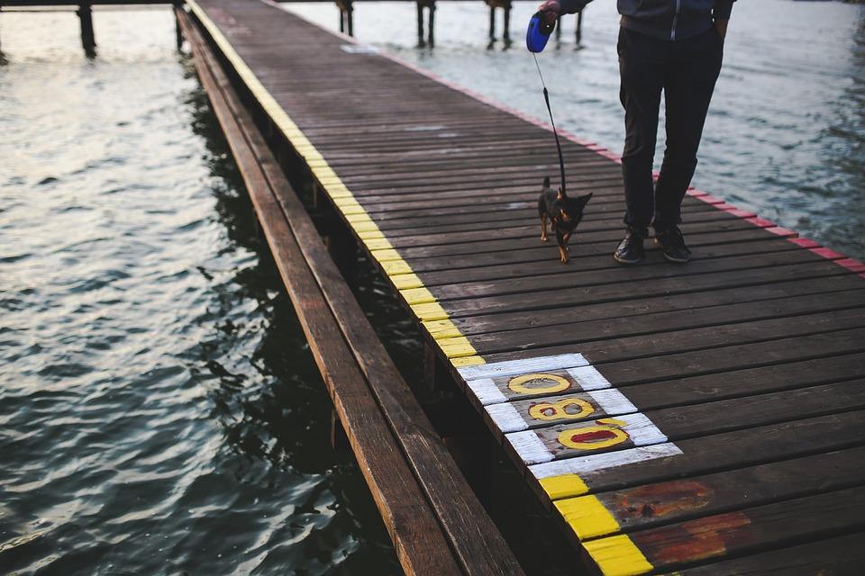Evening, Walk, Walking, Dog, Animal, Pier, Water, Lake