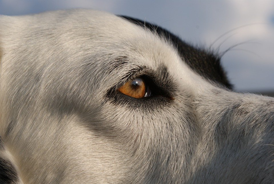 Dog, Animal, Friend, Pet, View, Eyes, Animals, Pictures
