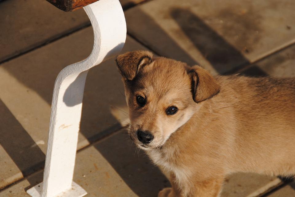 Dog, Puppy, Labka, A Wall, Outdoors, Animal, Chick
