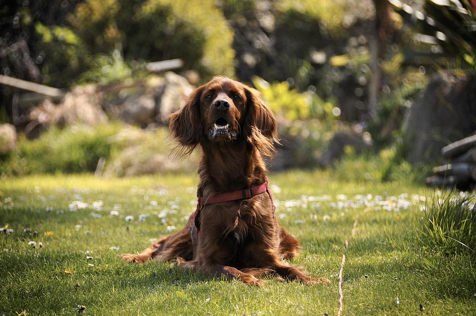 Dog, Garden, Spring, Domestic Animal, Nature, Animals