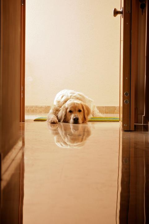 Animals, Dog, Pets, Pet, Portrait, Cute, Lying Down