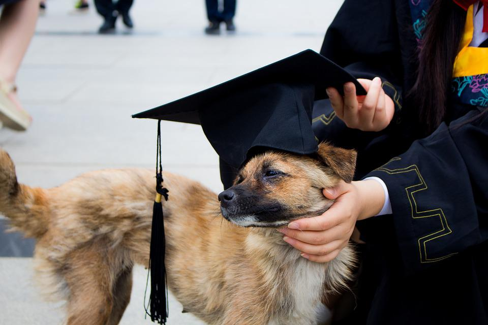 Free photo Dog Bachelor Gown Pets Hat Graduation Photo Funn - Max Pixel