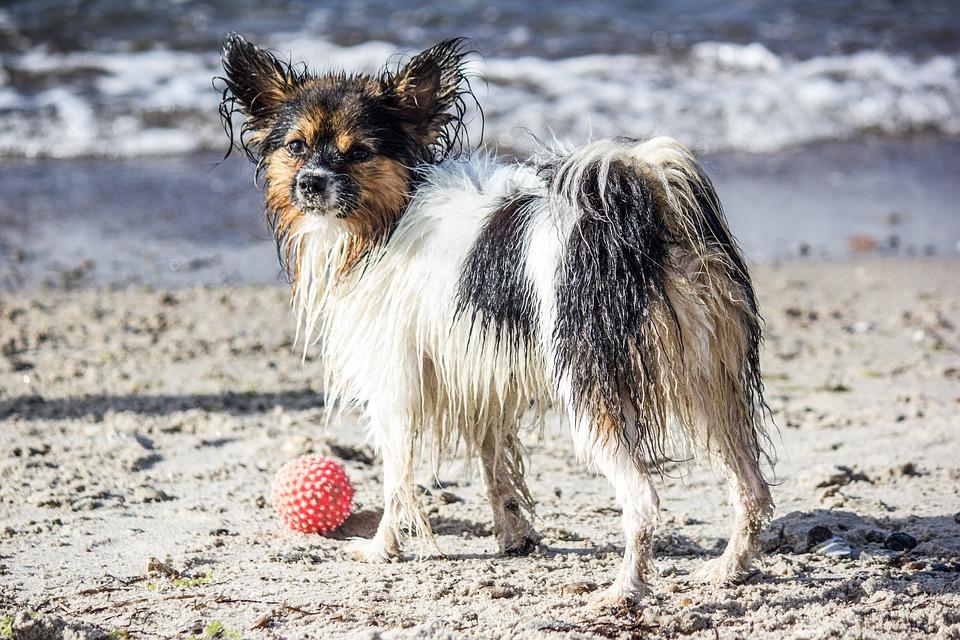 Dog, Pet, Ball, Beach, Sea, Black And White, Play