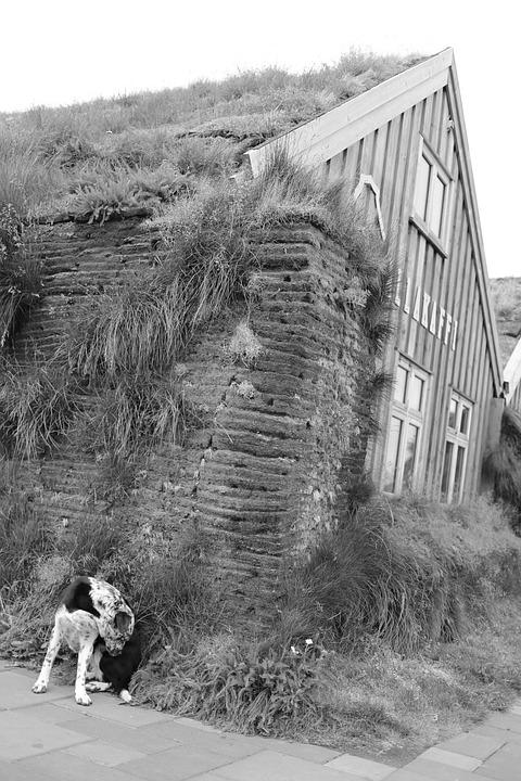 Dog, House, Village, Bezludzie, Iceland, Wooden House