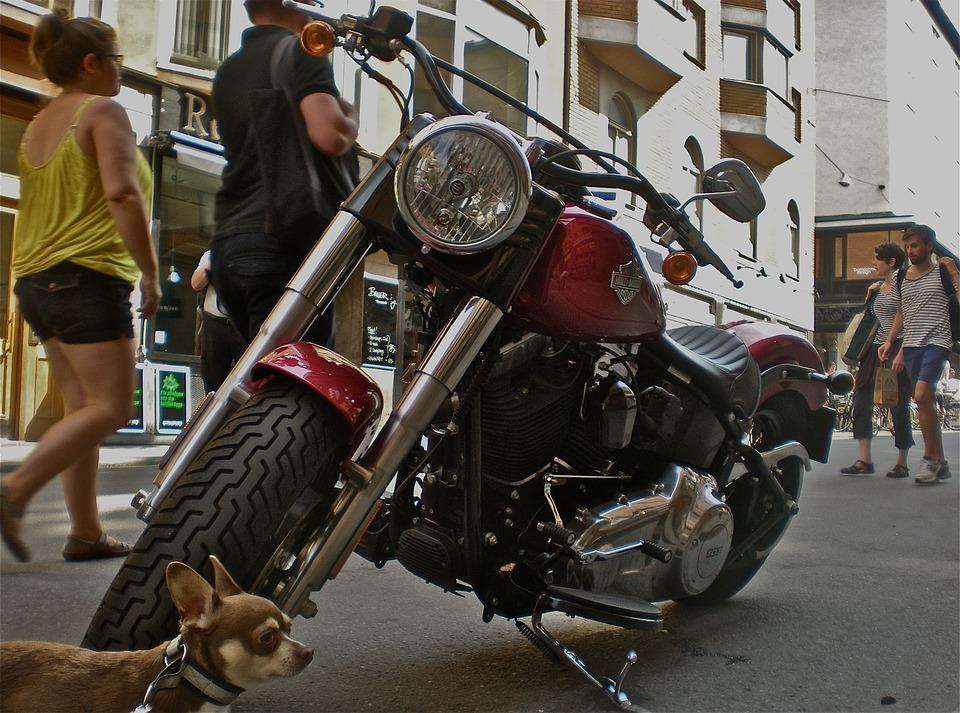 Bike, Dog, Pedestrian Traffic, City Life, Stockholm
