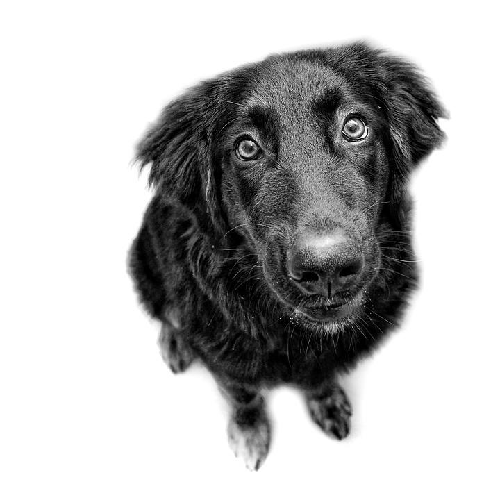 Dog, Black And White, Are You Looking At, Dog Look