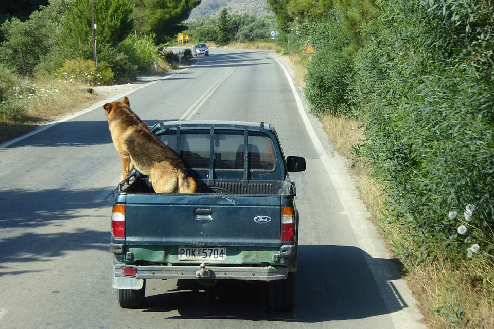 Dog, Pick Up, Traffic, Road, Car