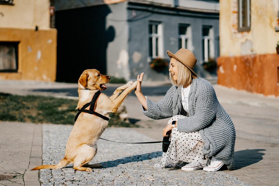 Girl, Dog, Pet, Friendship, Companion, Owner, Caucasian