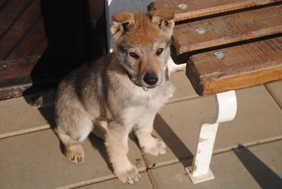 Dog, Puppy, Animal, Cute, Bitch, Outdoors, Happy Dog
