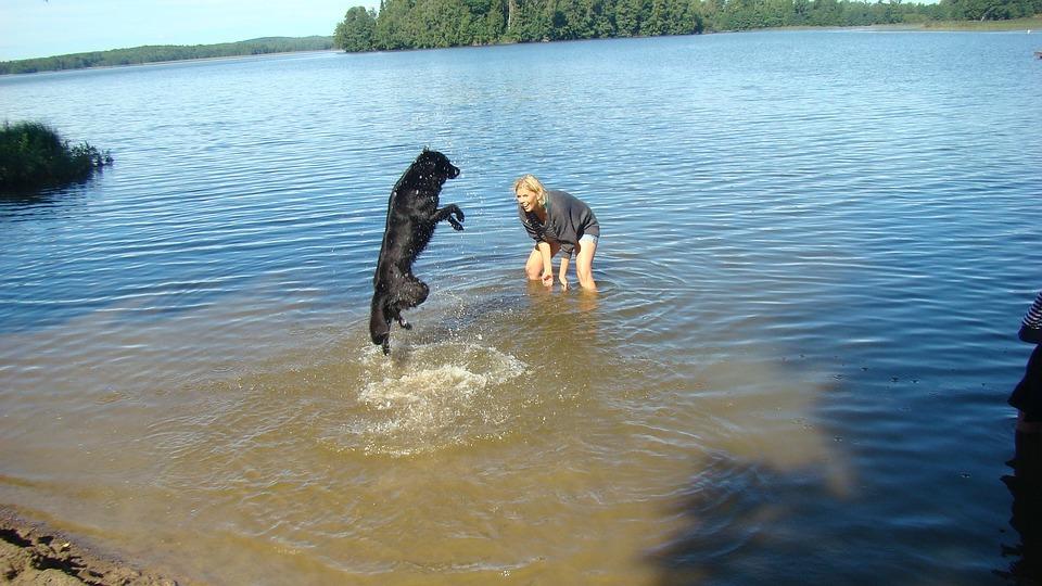 Dog, Happy, Summer, Died, Sweden