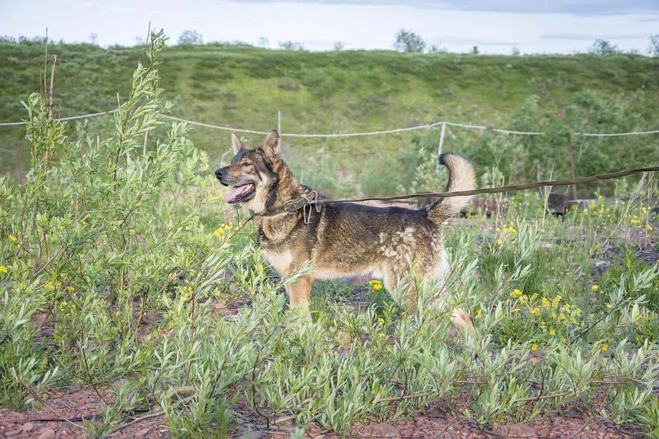 Dog, Leash, Pet, Collar, Dog Leash, Dog Collar