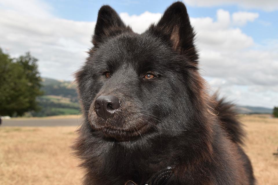 Dog, Bitch, Animal, Dog Portrait, Snout, Truffle