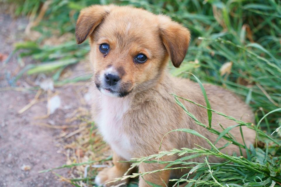 Free Photo Dog Dogs Baby Animal Pets Animal Portrait