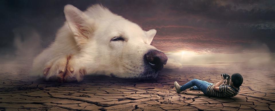Fantasy, Surreal, Dream, Dog, Photomontage, Mystical