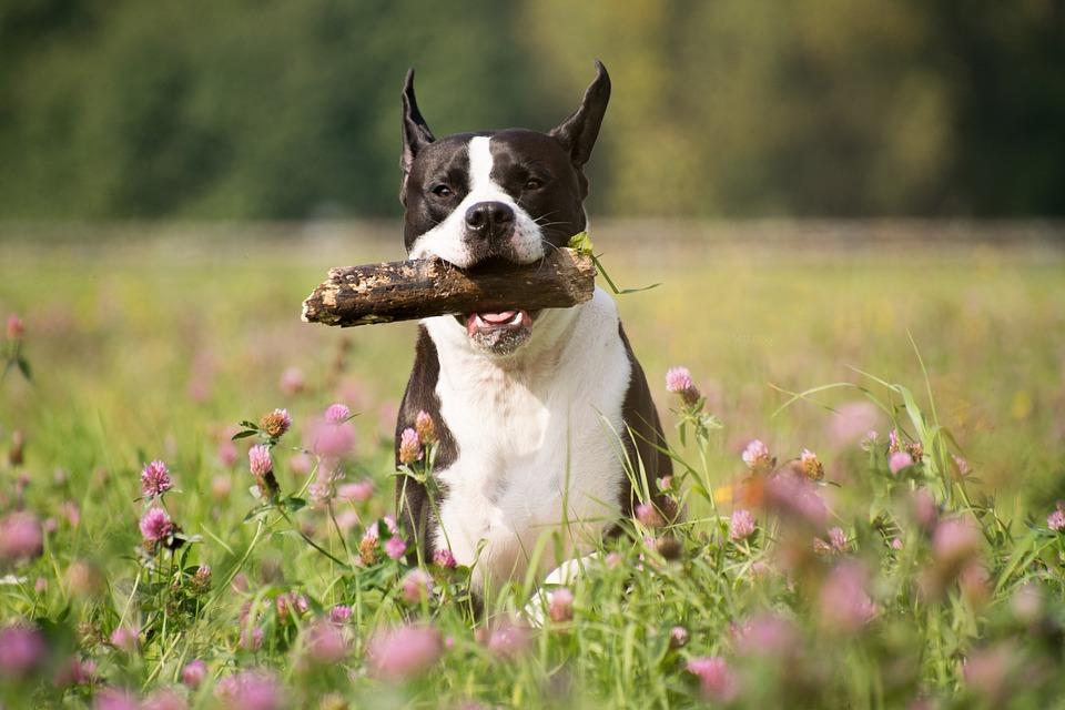 Mammal, Grass, Dog, Animal, Meadow, Floor, Flowers