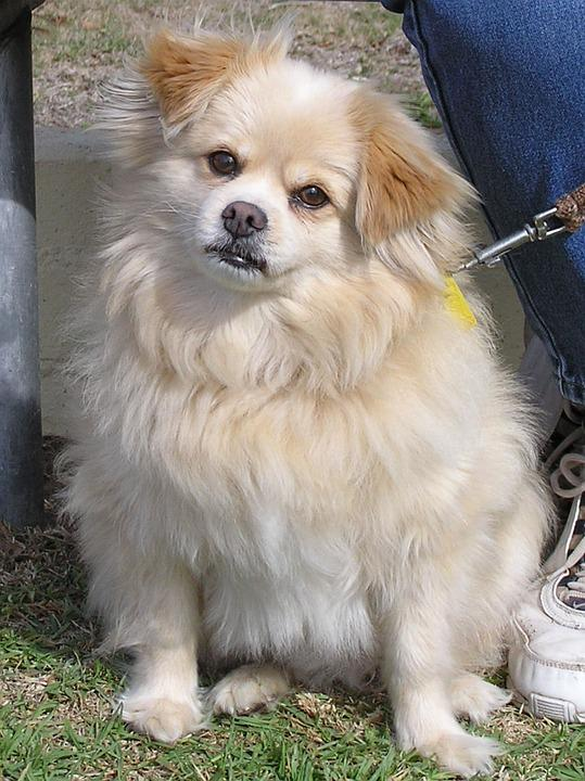Dog, Fluffy, Cute