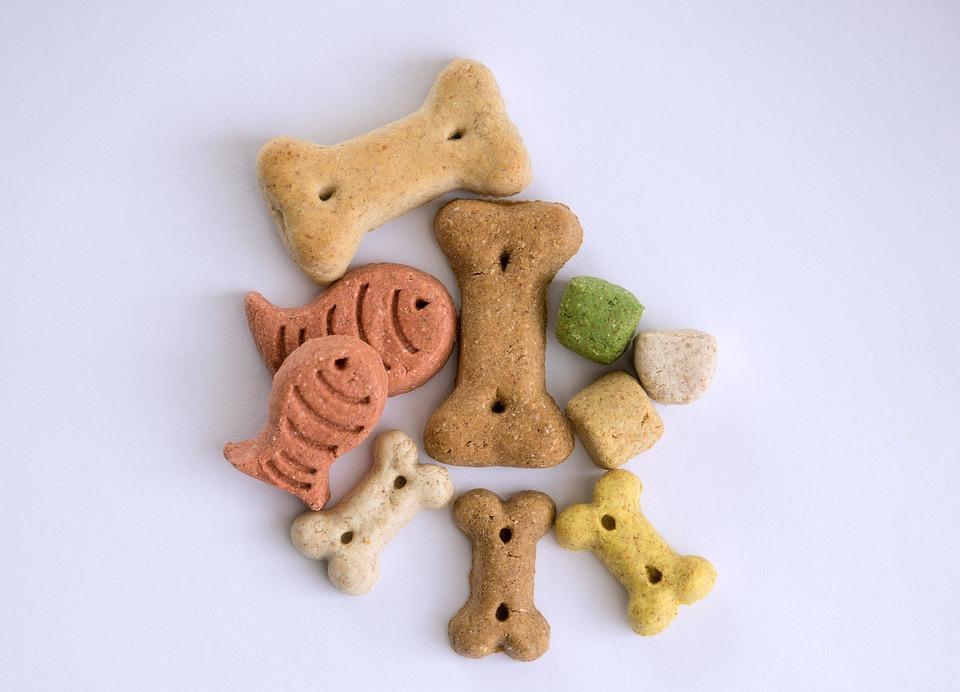 Treats, Dog, Bone, Dog Food, Dogs Lick Us, Reward, Eat