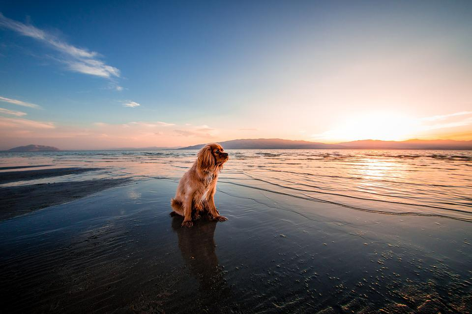 Beach, Dawn, Dog, Dusk, Fur, Furry, Landscape, Nature